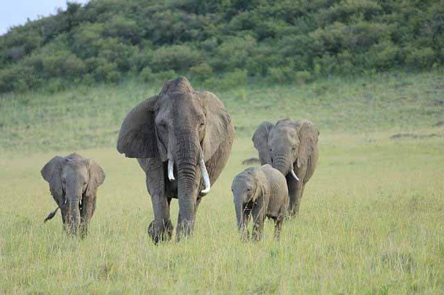 Baby-Mamas-and-the-Elephant-in-the-Room